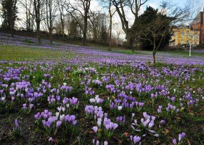 Frühling in Eckernförde